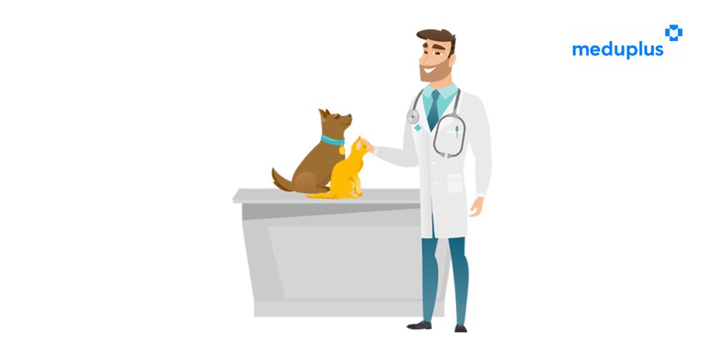 Bärte und Hunde - sind Hunde hygienisch? Wie wichtig ist Barthygiene?
